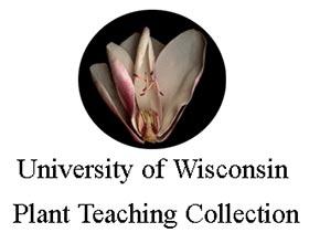 威斯康辛大学植物教学收藏 University of Wisconsin Plant Teaching Collection