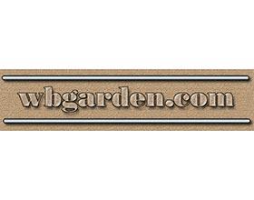 矮生针叶树花园 ,Dwarf conifers garden