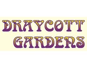 DRAYCOTT 花园, DRAYCOTT GARDENS