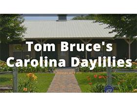 汤姆布鲁斯的卡罗莱纳萱草, Tom Bruce's Carolina Daylilies