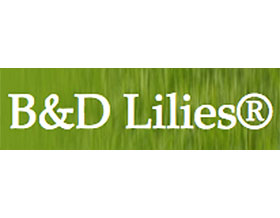 B&d百合, B&d Lilies