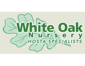 白橡树苗圃 White Oak Nursery