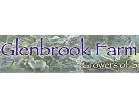格伦布鲁克农场, Glenbrook Farm