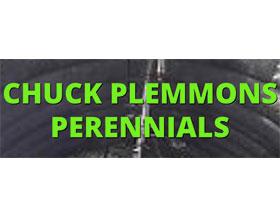 CHUCK PLEMMONS 多年生植物 CHUCK PLEMMONS PERENNIALS