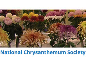美国国家菊花协会, National Chrysanthemum Society