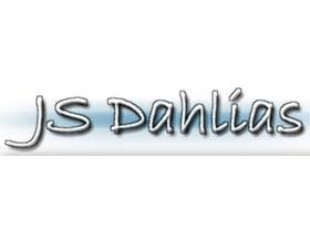 JS Dahlias大丽花