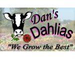 丹的大丽花, Dan's Dahlias