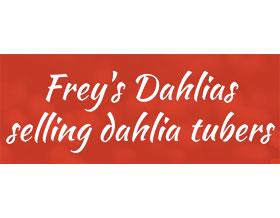 弗雷的大丽花, Frey's Dahlias