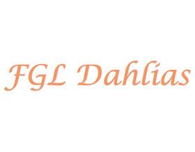 FGL Dahlias 大丽花