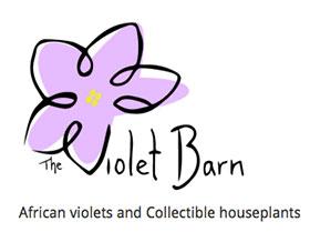 非洲紫罗兰和室内植物收藏, African violets and collectible houseplants