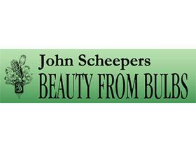 美国约翰·舍佩斯美丽球茎 John Scheepers Beauty From Bulbs