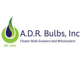 ADR 球茎 ,ADR Bulbs