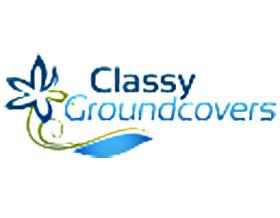 上等地被植物, Classy Groundcovers