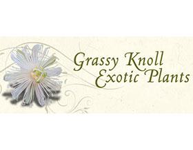 Grassy Knoll 外来植物, Grassy Knoll Exotic Plants