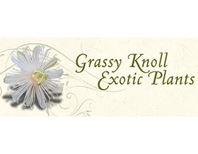 美国草丘外来植物 Grassy Knoll Exotic Plants