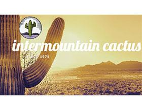 山间仙人掌, Intermountain Cactus