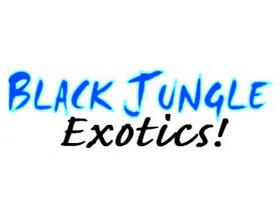 黑丛林玻璃容器种植 ,Black Jungle Terrarium Supply