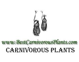 食肉植物, Carnivorous Plants