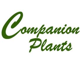 伴侣植物, Companion Plants