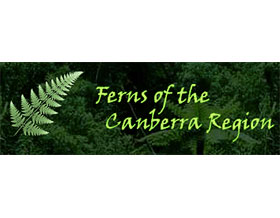 堪培拉蕨类 ,Ferns of the Canberra Region