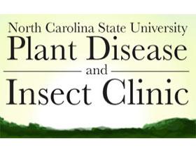 北卡罗莱纳州立大学植物疾病和虫害诊所 NC Plant Disease & Insect Clinic