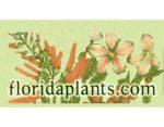 佛罗里达植物在线 ,floridaplants.com