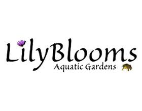 美国百合花水生植物花园 Lilyblooms Aquatic Gardens