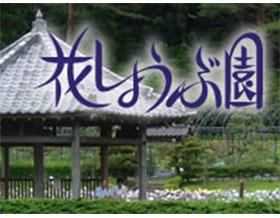 日本永泽寺院花菖蒲庭园