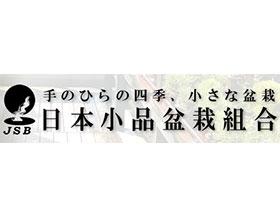 日本小品盆栽组合