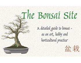 盆景网 ,BonsaiSite.com