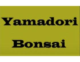 树桩盆景, YAMADORI BONSAI