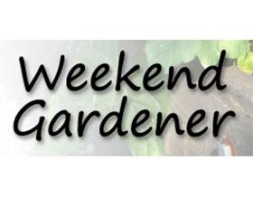 周末园丁, Weekend Gardener