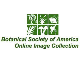 美国植物协会在线植物图库 ,Botanical Society of America Online Image Collection