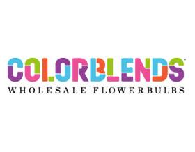 混色花卉球根批发 Colorblends Wholesale Flowerbulbs