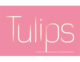 野生郁金香 Tulips in the Wild