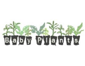 种苗公司 Baby plants