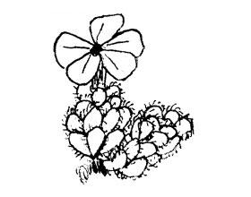 VojtêchHolubec高山植物种子