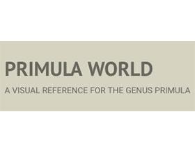 樱草(报春花)世界 Primula World