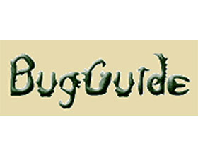 昆虫指南 Bug Guide