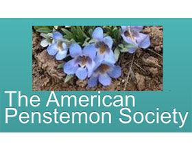 美国钓钟柳协会 The American Penstemon Society