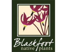 加拿大黑脚原生植物 Blackfoot Native Plants