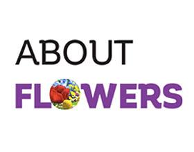 关于花卉 About flowers