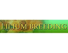 百合属育种 Lilium Breeding