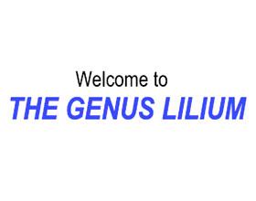 百合属网站 THE GENUS LILIUM