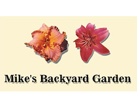 麦克的后花园 Mike's Backyard Garden