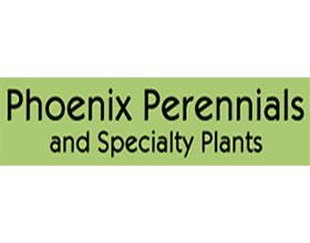加拿大凤凰多年生植物 Phoenix Perennials