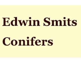 荷兰埃德温·史密斯针叶树 Edwin Smits Conifers