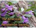 美国钓钟柳协会 The American Penstemon Society