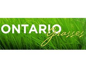 加拿大安大略省的草 Ontario Grasses