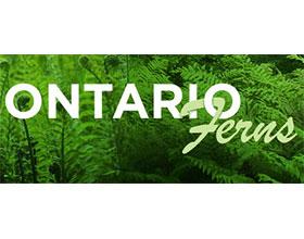 加拿大安大略省的蕨类 Ontario Ferns